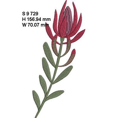 Fynbos Flowers-6