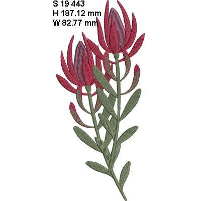 Fynbos Flowers-7
