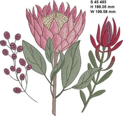Fynbos Flowers-9