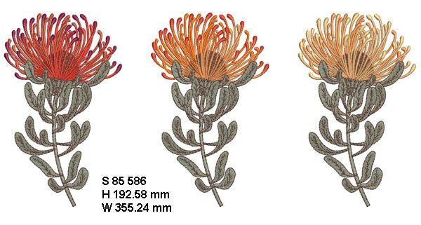 Fynbos Flowers-15