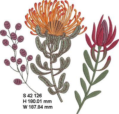 Fynbos Flowers-16