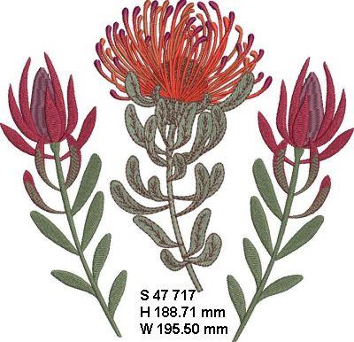 Fynbos Flowers-18