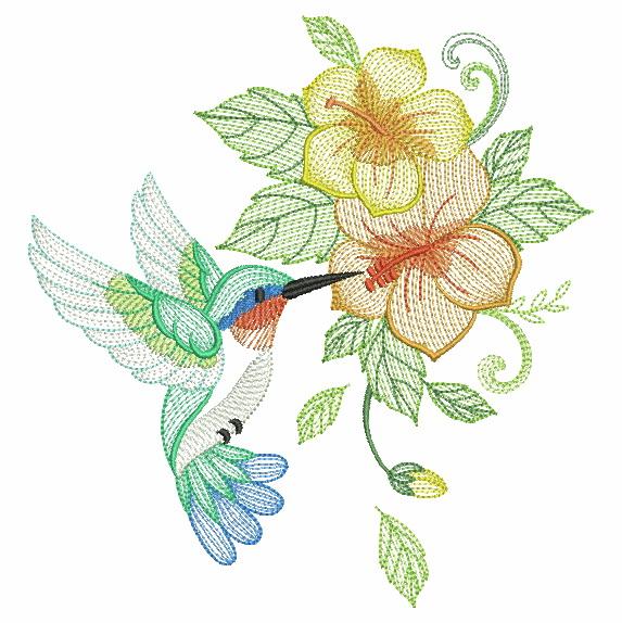 Elegant Hummingbirds 4-4