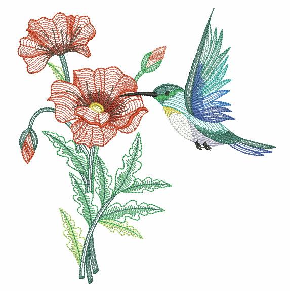 Elegant Hummingbirds 4-5