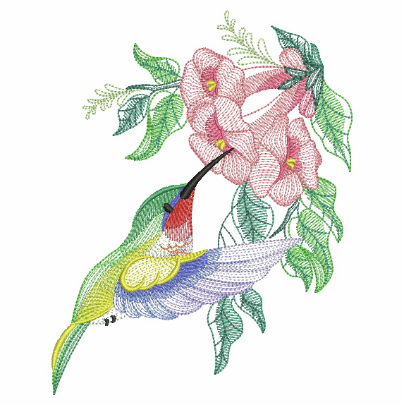 Elegant Hummingbirds 4-7