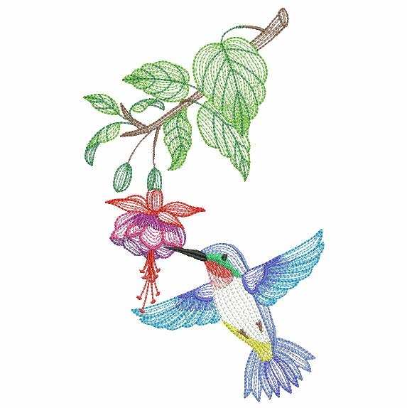 Elegant Hummingbirds 4-8