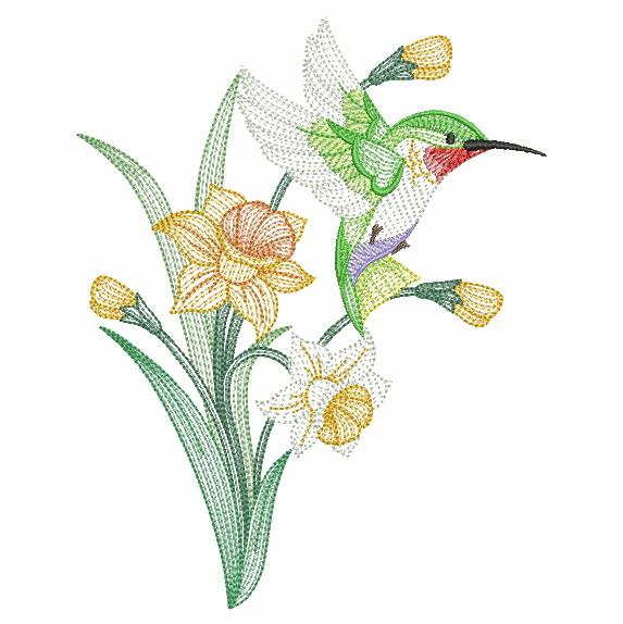 Elegant Hummingbirds 4-9