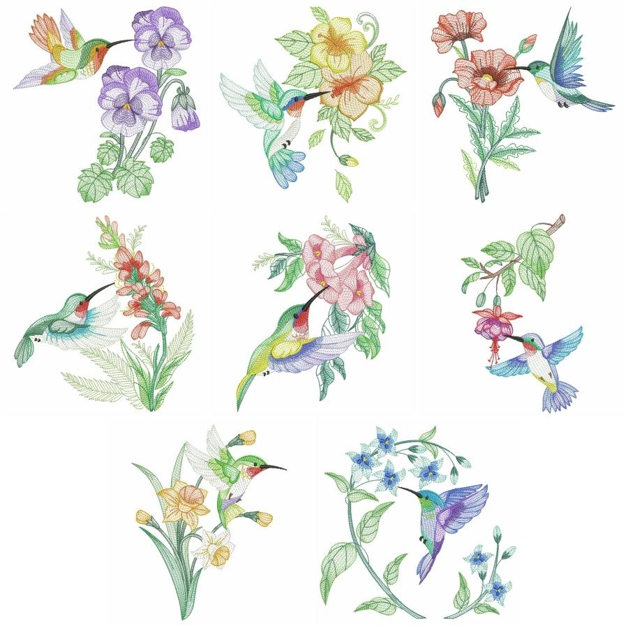 Elegant Hummingbirds 4