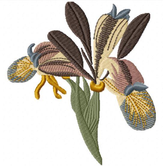 Iris 2103