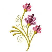Queen Annes Flowers