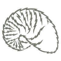 Seashell Silhouettes