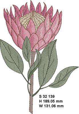 Fynbos Flowers-10