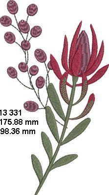 Fynbos Flowers-11