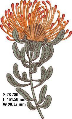Fynbos Flowers-12