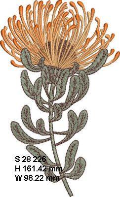 Fynbos Flowers-13