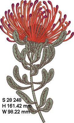 Fynbos Flowers-14