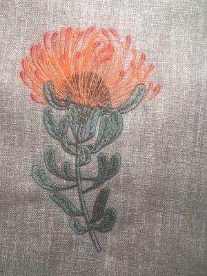 Fynbos Flowers-19