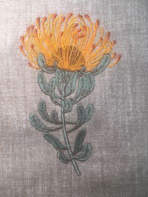 Fynbos Flowers-20