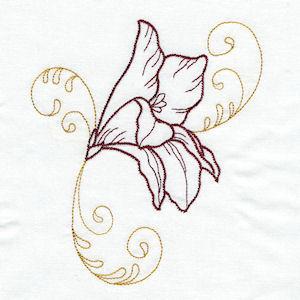 Divine Lillies