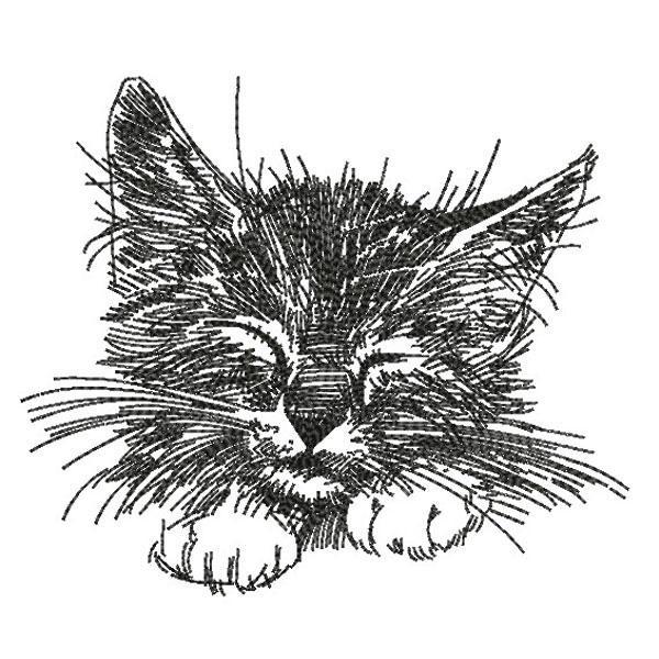 SDS0346 Cat