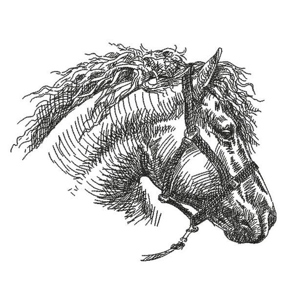 SDS0349 Horse Pencil Sketch